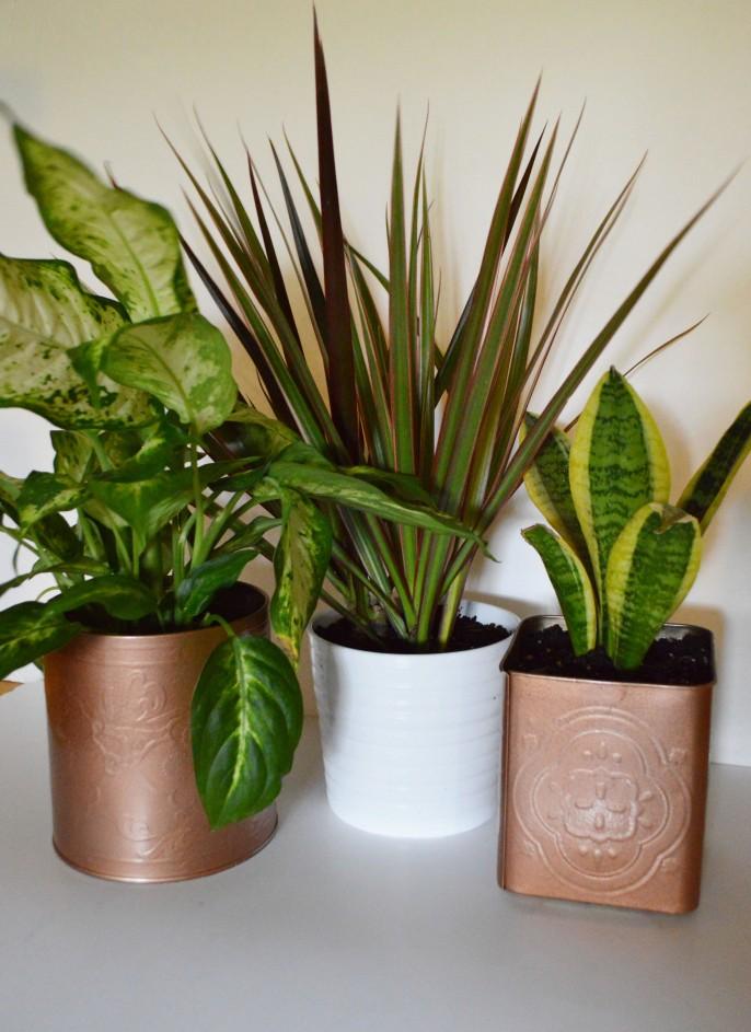 Both Planters